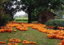 Pumpkins are more than just a decoration, they are also a health food.