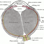 The eye is complex but can be helped with the right nutrition.
