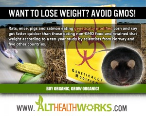 GMOs cause weight gain according to long-term animal feeding studies.