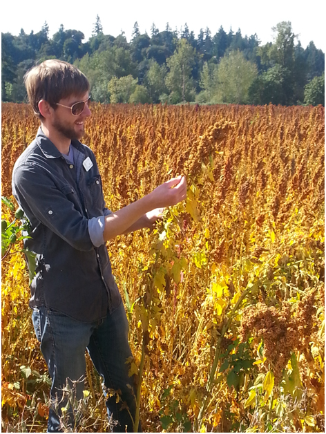 Growing quinoa in America (and in your backyard). Is it possible? Here, Jared from the food share inspects the crop.