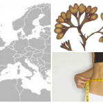 Fucus has been used for centuries as a weight loss aid in Europe.