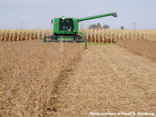 Diversified, non-GMO systems were found to have the highest yields by researchers in this Iowa experiment. Photo: The Leopold Center