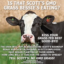 Genetically Modified Grass from Scotts and Monsanto: Lawn Tests Are Set; Boycotts Being Readied
