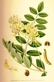 The Chinese herb astralagus is excellent for DNA repair.