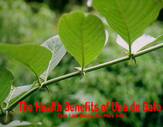 The Health Benefits of Una de Gato- Why Cat's Claw is ...