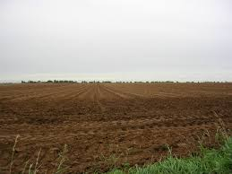 Vitamin B12 comes from the soil, but our soils are sorely lacking at this point in time. Photo: www.geograph.org/uk