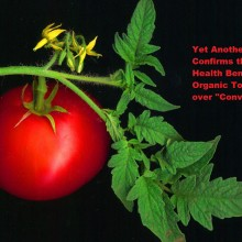 "Yet Another Study Confirms the Bonus Health Benefits of Organic Tomatoes vs. ""Conventional"""