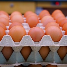 Free-Range or Pastured? Demystifying What Egg Carton Label Claims Actually Mean