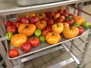 Several varieties of tomatoes are shown in this Minneapolis Schools picture (courtesy of Metzger).