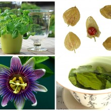 Four Natural Herbs to Combat Anxiety and Depression (Includes Effective Dosage Amounts)