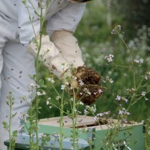 100,000 German Beekeepers Defy Agricultural Minister, Call for Nationwide GMO Ban