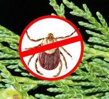How to Keep Ticks from Biting You with One Simple Natural Remedy