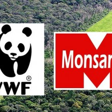 Monsanto, World Wildlife Fund Team Up to Greenwash the Amazon Rainforest With GMOs