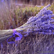 50+ Traditional Uses for Lavender You May Not Have Known About