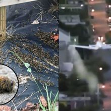 """Like It's Been Nuked"" — Millions of Bees Dead After Zika Spraying in South Carolina (with video)"