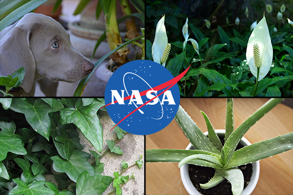 These are the best air purifying plants to buy according for Nasa indoor plant list