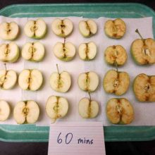 "Three New Genetically Engineered ""Non-Browning"" GMO Apples Are Hitting Store Shelves! Here is How to Avoid Them"
