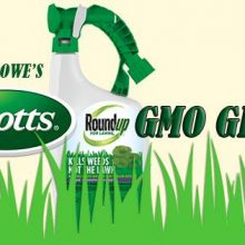 Petition Launched Against Home Depot and Lowe's to NOT Carry New GMO Grass from Scotts and Monsanto