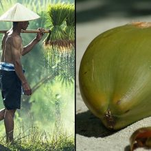 Sasak People of Indonesia Possess Natural Strength and Muscle Mass Thanks to This Popular Food. Here's Why It Works…