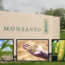 The Top 10 Most Important GMOs to Recognize and Avoid Buying at All Costs