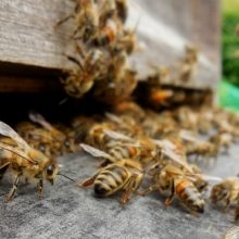 New Study Reveals: Insect Population is Collapsing. It's Not Just Bees. Pesticides May Be to Blame…