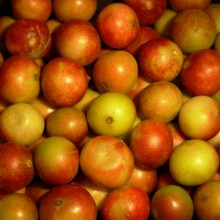 Camu Camu Said to Be the Most Vitamin C Rich Food on Earth