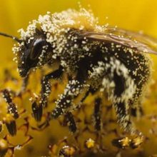 8 Surprising Health Benefits of Bee Pollen