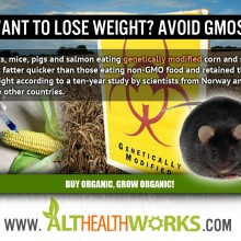 GMO Food and Weight Gain: Why Do So Few See the Link?