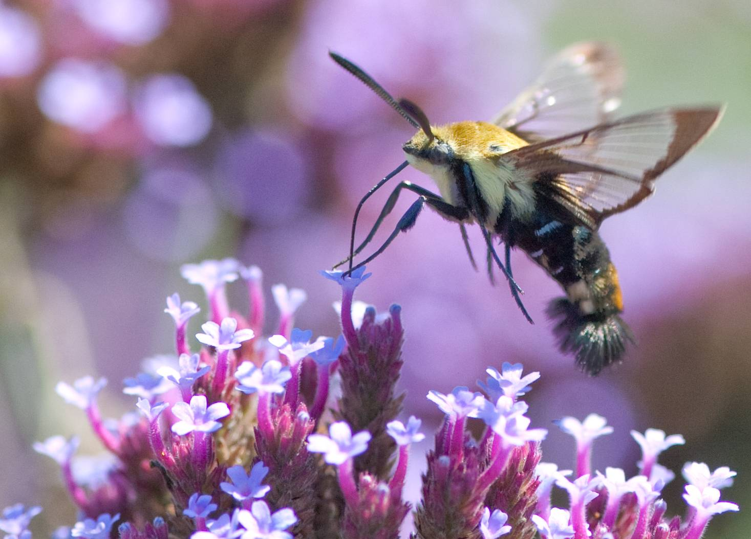Organic farms are better for better species diversity including bees and other insects, Oxford University study says.