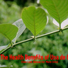 The Health Benefits of Una de Gato- Why Cat's Claw is Helpful for Natural Herb for Smokers, Autoimmune Diseases