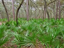 Saw palmetto extract is great for hair regrowth and men's health in general.
