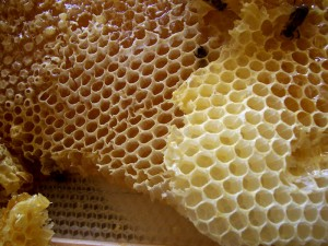 Raw honey can help fuel the liver and eliminate belly fat when taken at night.