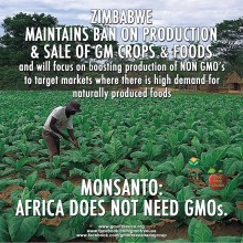 Zimbabwe Plans to Continue Ban on Genetically Modified Food, Will Pursue Natural Food Markets Instead