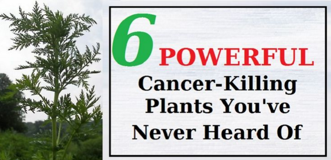 6 devastating cancer killers althealthworks Google Search