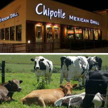 Texas Ag. Commissioner Upset at Chipotle's Switch to Grass-Fed, Antibiotic-Free Australian Beef
