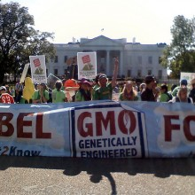 New Consumer Reports Poll Shows 92% Want GMOs Labeled; Support for Local Farmers, Avoiding Pesticides Also Expressed