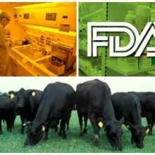 "FDA Requests New Pharmaceutical Products to Make Animals Gain Weight Faster, Admits ""Lack of Safety Data"""