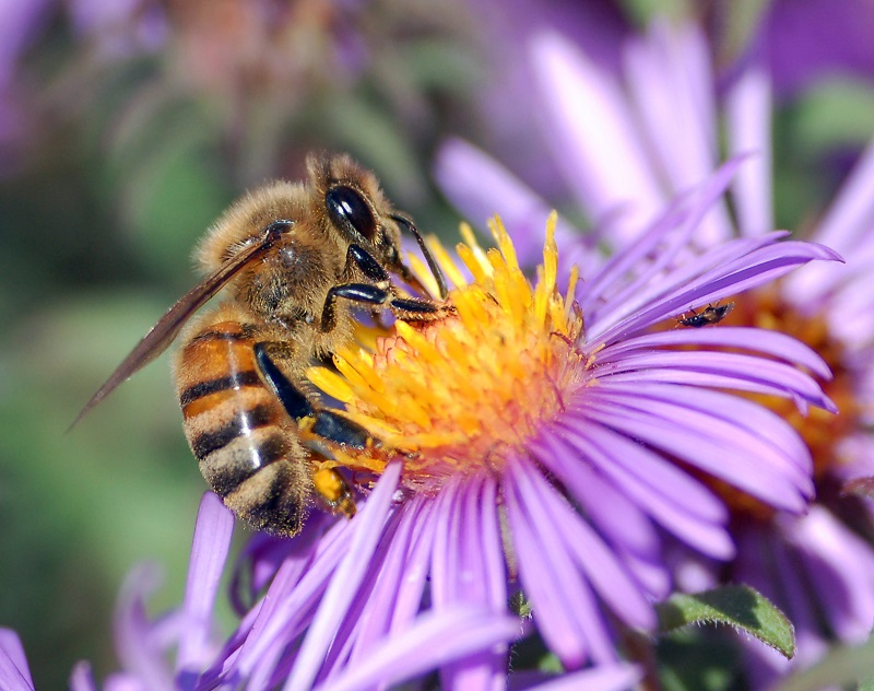 Bees must avoid the neonic pesticides in order to survive, studies say.