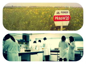 DuPont recently submitted its own GMO canola study to a journal.