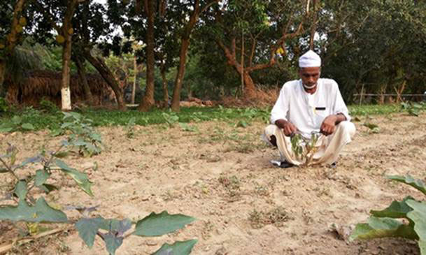 A GM Brinjal test plot is being described as a failure in Bangladesh.