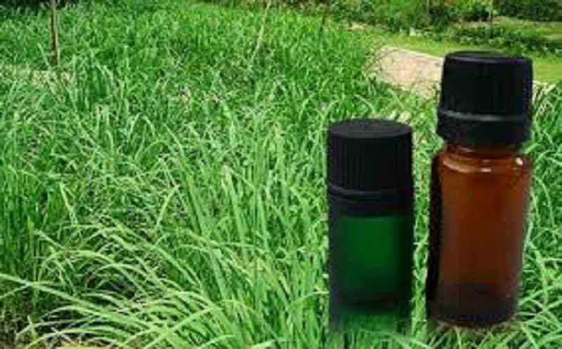 Citronella is a natural plant extract used safely for thousands of years, but now bug sprays containing it will be banned.