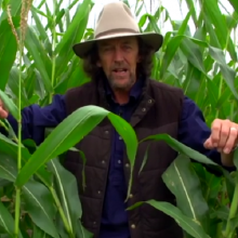 "Permaculture Expert Takes Viewers on a GMO Cornfield Tour: ""There's No Life Here at All…This is Not Farming"""