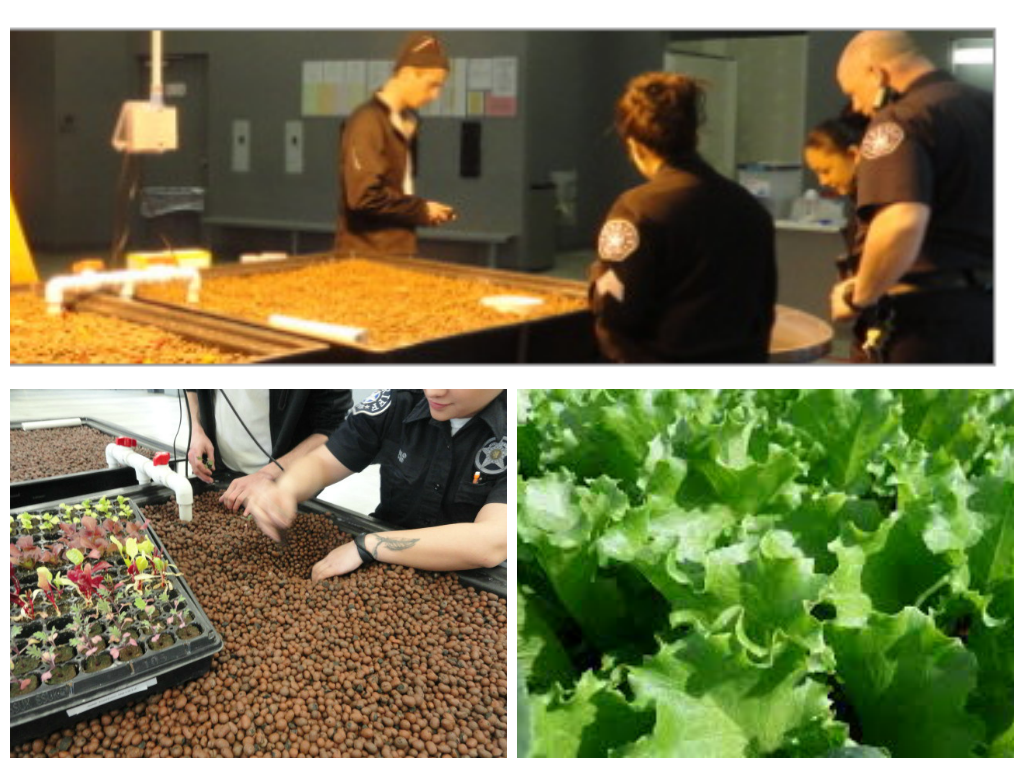 The Colorado Aquaponics-created system at the Denver County Jail.