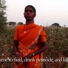 """One Suicide Every 30 Minutes:"" GMO Seeds from Monsanto Blamed for Rising Death Rate  in India"