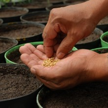 Your 5 Most Frequently Asked Questions About Seeds, Answered
