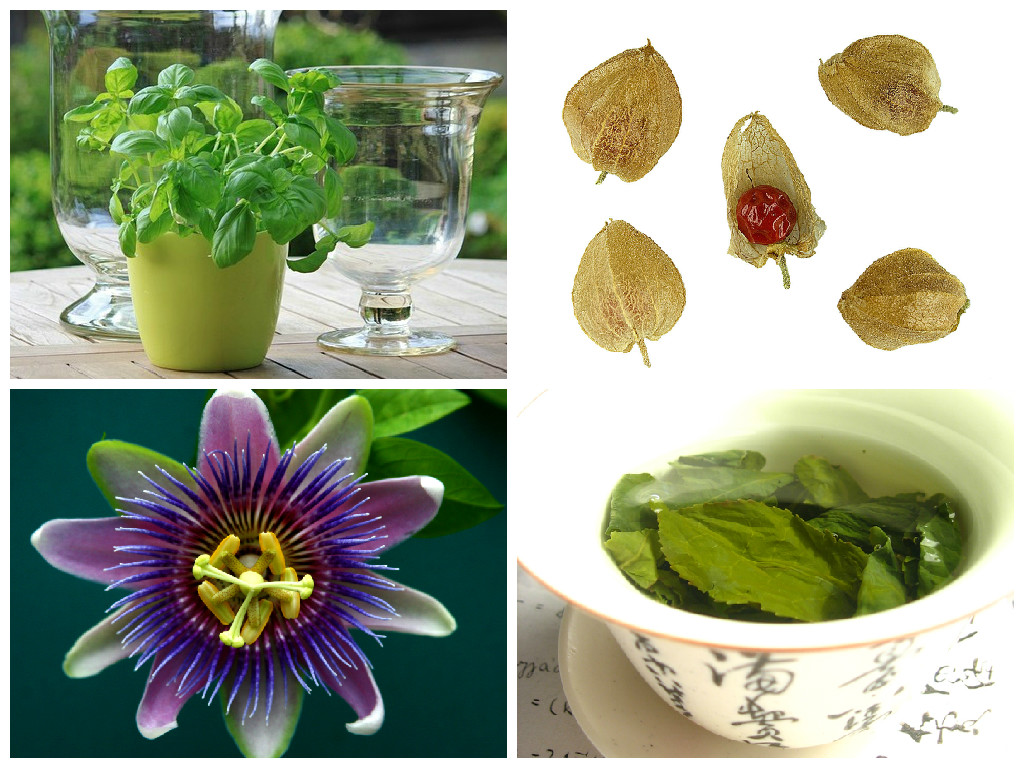 natural herbs for depression