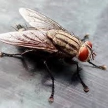 How to Get Rid of Flies Without Chemicals or Even a Fly Swatter