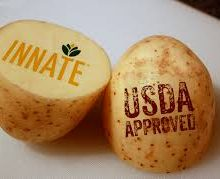 Unlabeled GMO Potatoes Finally Landed on Store Shelves; What You Must Do to Avoid Them