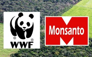 monsanto gmo soy rainforest