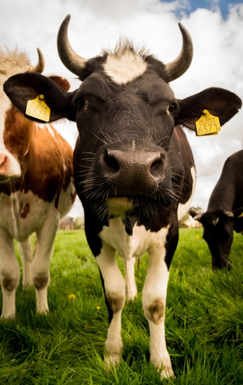 animal-countryside-agriculture-farm-large